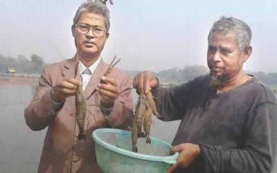 淡水でエビ養殖が成功