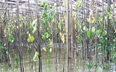 農作物に冠水被害