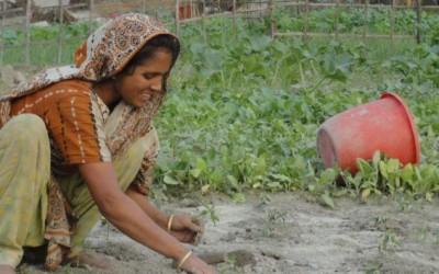 女性農家のほうが上手