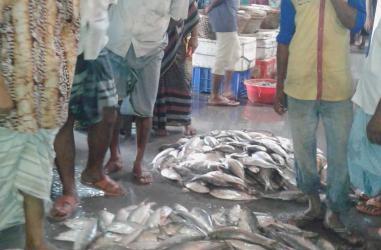 ヒルサ豊漁
