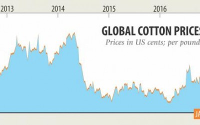 今後、綿需要の10%を生産