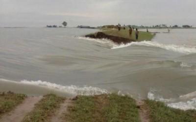 ダム決壊で1万haの作物喪失