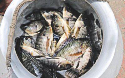 バングラデシュの魚革命