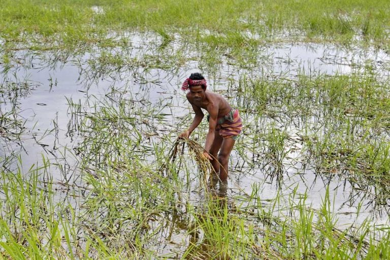 食糧生産94.3万トン減少