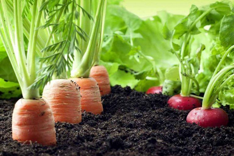 安全な食糧生産のために