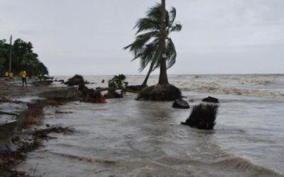 海の浸食で林が消える