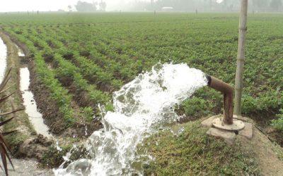 Bograジャガイモ栽培者の眼のバンパー収量