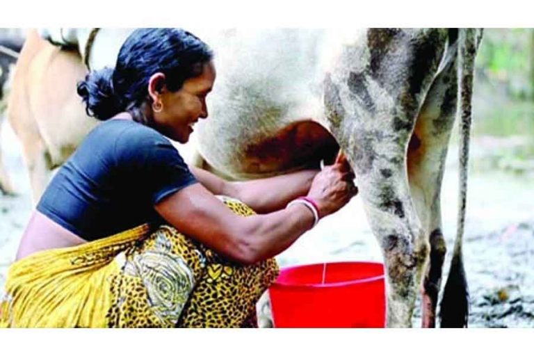 酪農業で農村の発展を