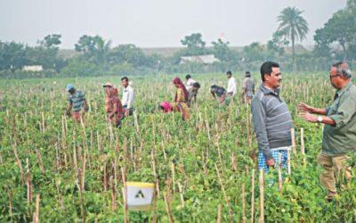 農業起業家は道徳とビジネスを結びつける