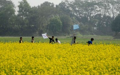 Digaldi地区の村の男の子はマスタード畑の横で遊ぶ
