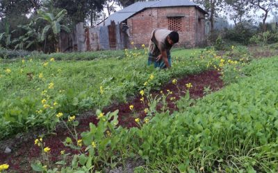 野菜の栽培は、ナトー周辺の農民に祝福をもたらす