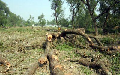 カラパラの森で200本の木が伐採された