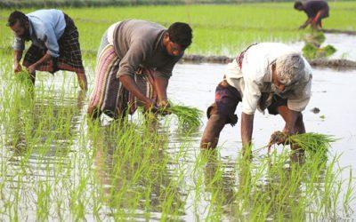 高い生産コストは、4つのdistsの0.6mのBoroの栽培者の大きな懸念