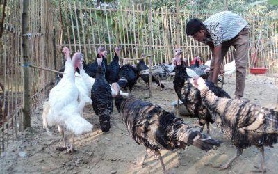 ホームベースの七面鳥の農家所有者はJoypurhatで多くを改善する