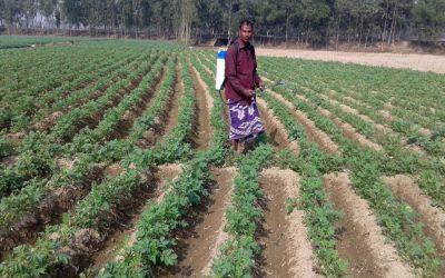 ジャガイモの栽培者がRangpurの疫病で襲う