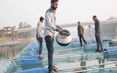 ケージでの魚の栽培は、Mohadevpur農家にソルベンシーをもたらす