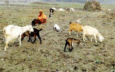Rangpurの極端な貧困者は、