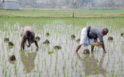 農家は水田の植え付けに忙しい
