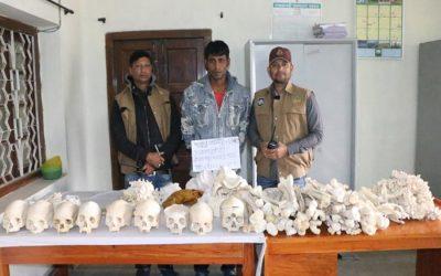 医学教師、学生は地元市場で人間の骨格を利用できるように政府に要請する