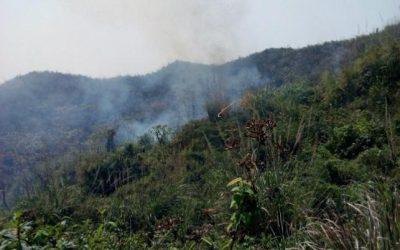 テクナフの森で火災