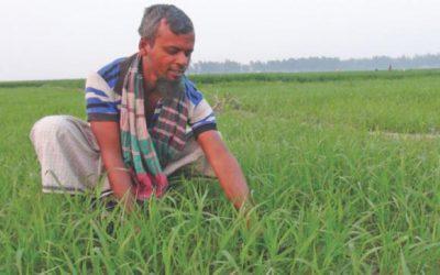 中国の農業が普及