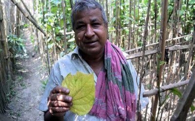 根の腐敗、真菌の病気がうなぎの葉の農業を妨げる