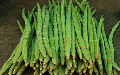 Rangpur sajinaの栽培者は今年より多くの利益を目指す