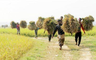 新たに収穫された農産物を家に帰す田んぼ農家