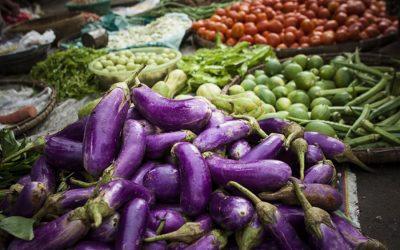 野菜栽培で忙しい北部の農民