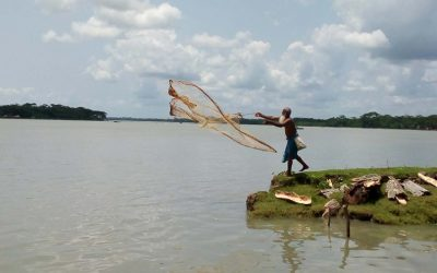 古い漁師が魚を捕まえることに忙しい