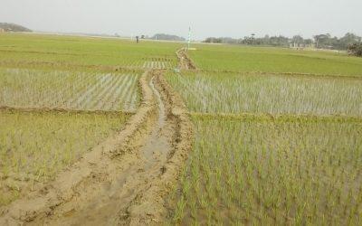 シレットDAEは、今シーズン広大な土地でAusの農業をターゲットにしています