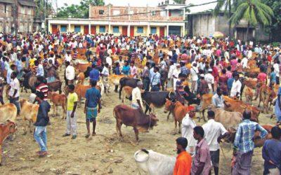 敷地内の牛市場