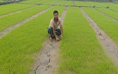 Rangpurゾーンの農民はBoroの苗床を準備して忙しい