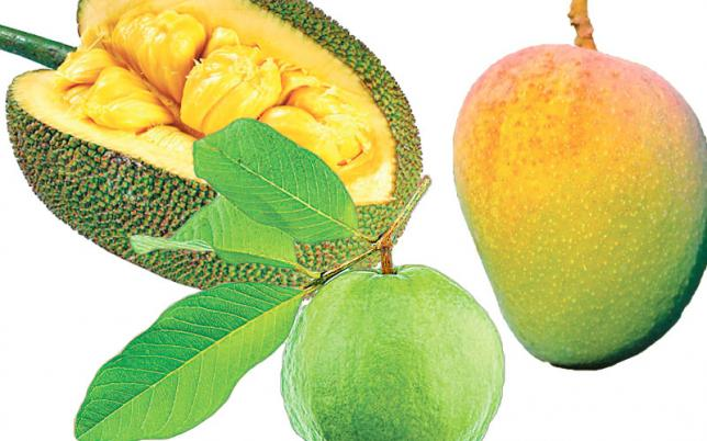 果物生産の成功
