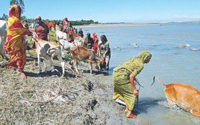 牛の共有飼育拡大