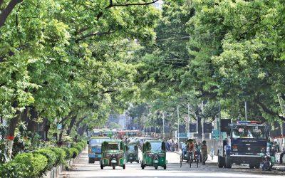 アブドゥル・ガニ通りの木