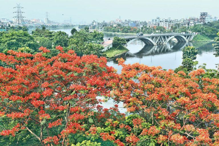 クリシュナチュラの木