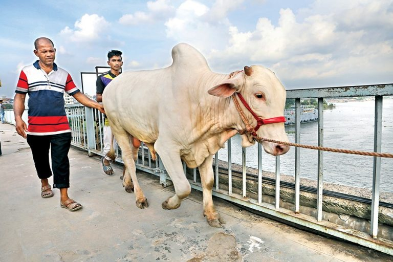 犠牲牛の販売が勢いを増す
