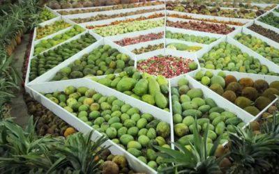 果物生産が著しく伸長