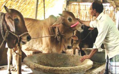 家畜の需要激減