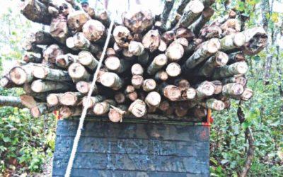 森林取得リストを公開