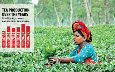紅茶生産減少も目標超える
