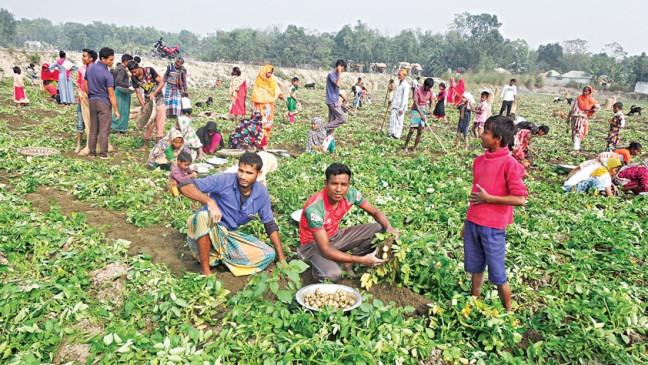 初期のジャガイモの収穫はニルパマリの農家に喜びをもたらします
