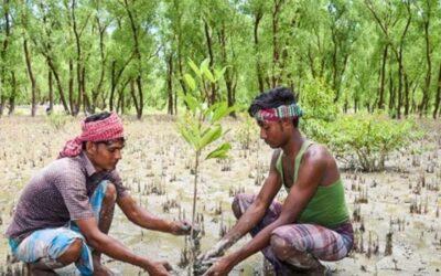 バングラデシュは気候変動への耐性への道のりで世界をリードすることができます