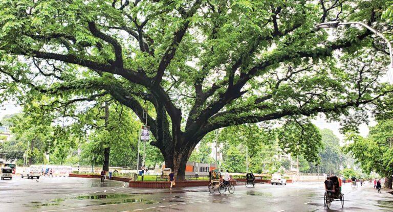 ダッカ大学のキャンパス:都会のジャングルの緑