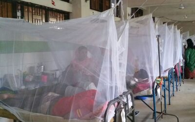 デング熱で1人死亡317人入院