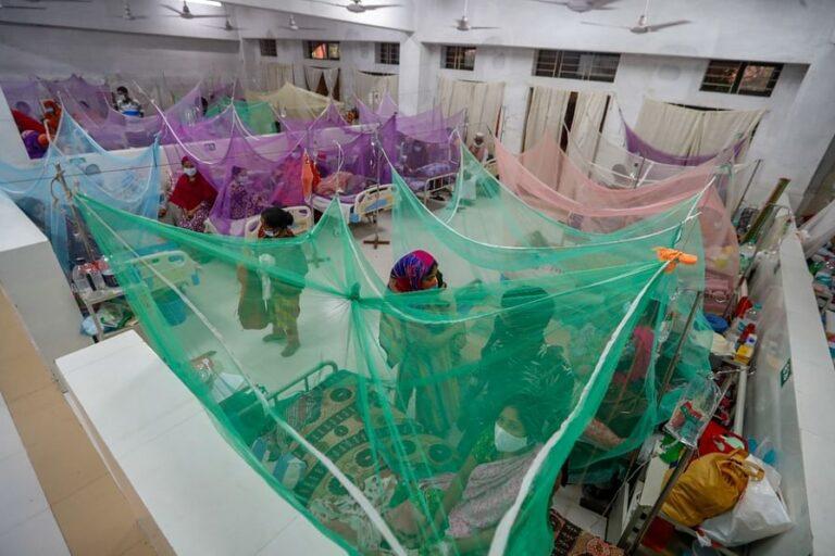 デング熱で3人死亡288人入院